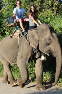 ... e elefante!