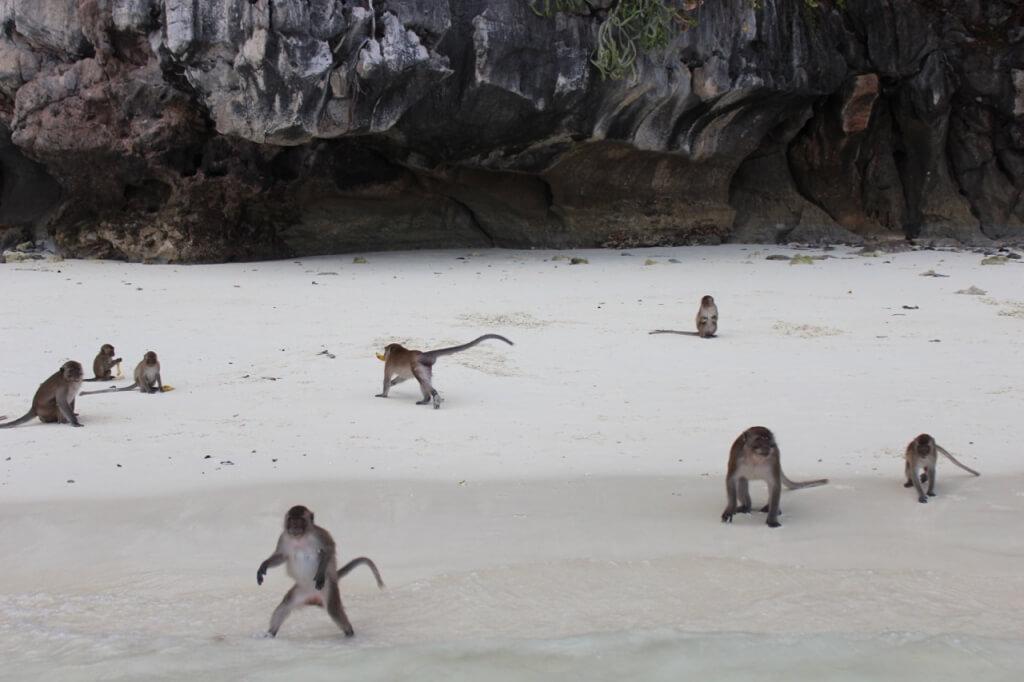 Recepção dos macacos